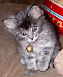 CAT CAT 2