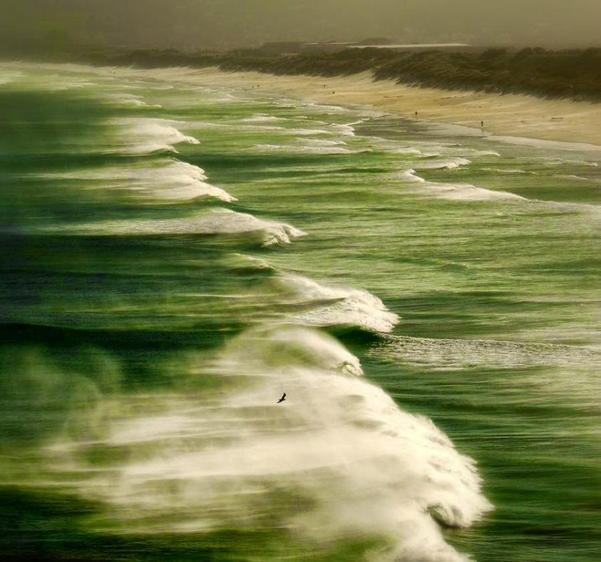MURMUR of   THE SEA